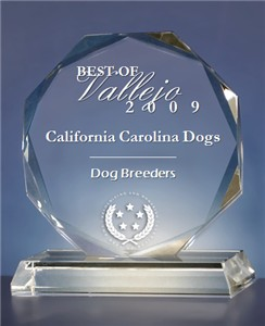 Best of Vallejo California Carolina Dogs - Dog Breeders Award