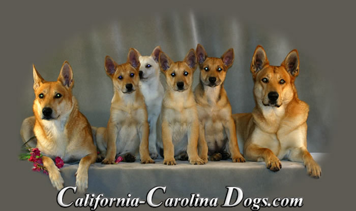 California Carolina Dogs Logo