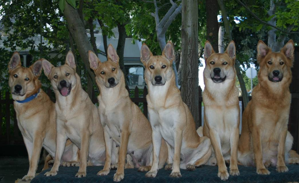 California Breed Dogs